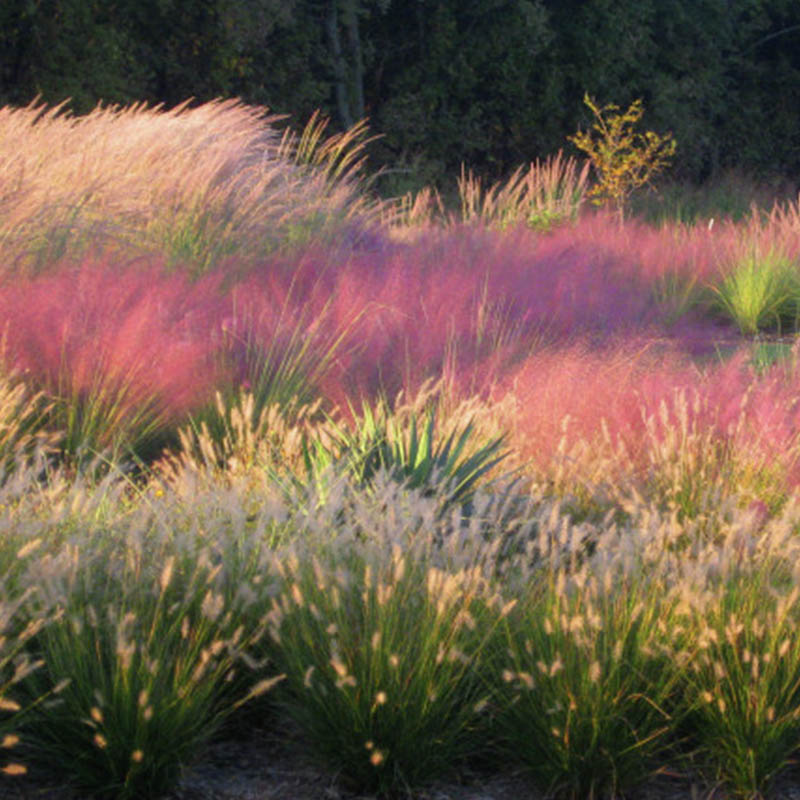 Xeriscaping | Rooted in